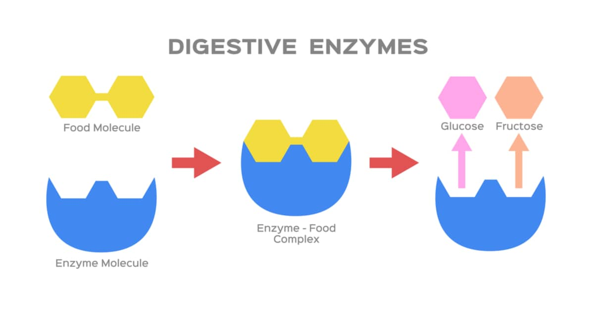 Digestive enzymes vector