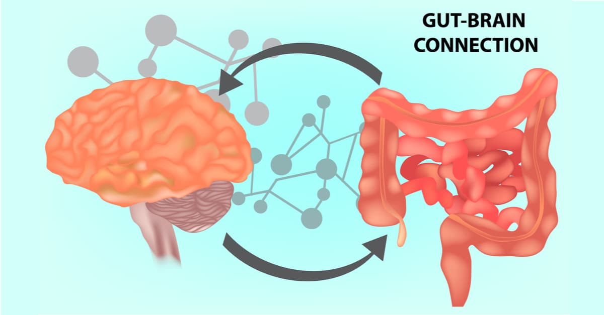 Vector illustrating the gut and brain connection, essential for gut health